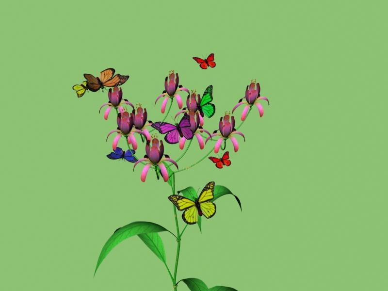手绘画蝴蝶图片大全