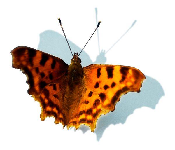 建筑与室内设计师--[区版:zyok888] 素材贴图专区 → 美丽的蝴蝶图片