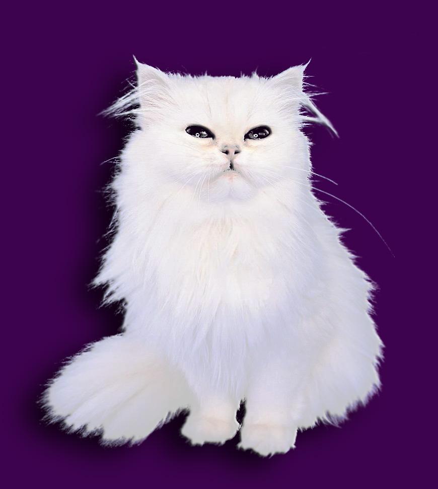 ps动物毛发画法-动物毛发的画法_动物毛发素描画法__.