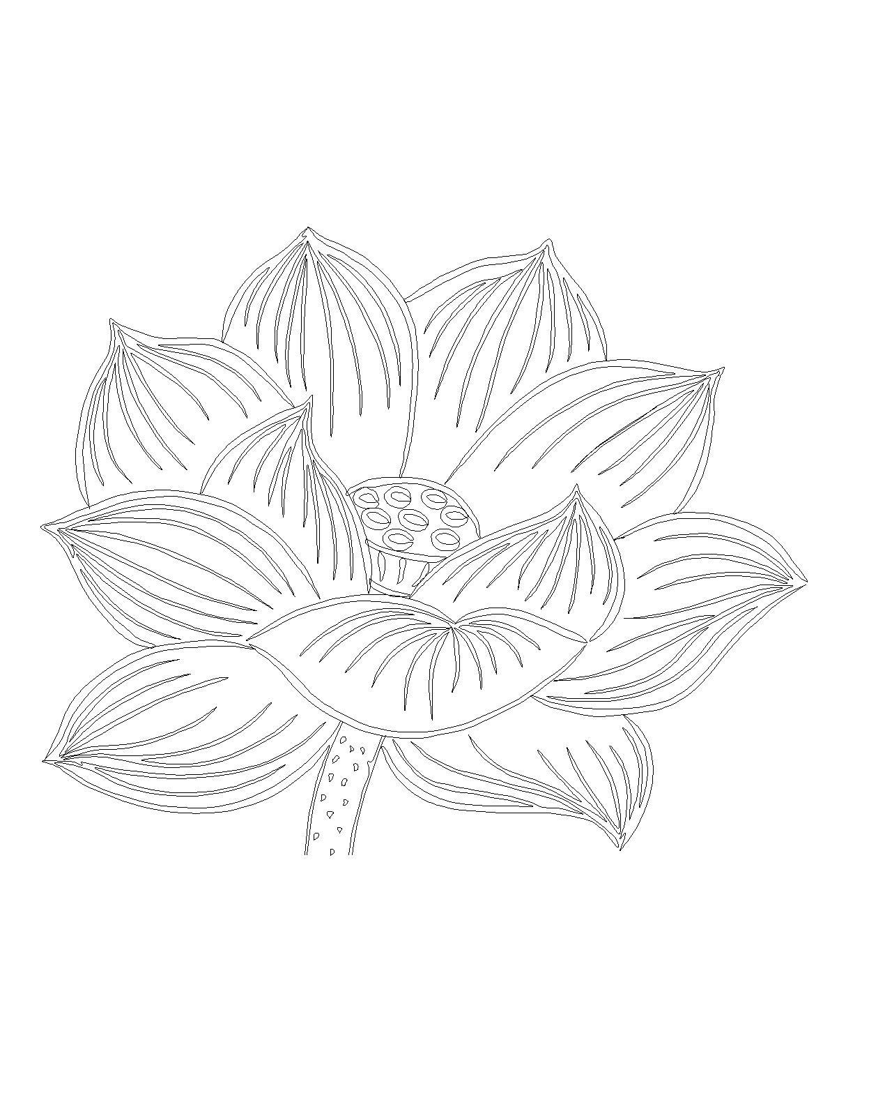 cad手绘莲花
