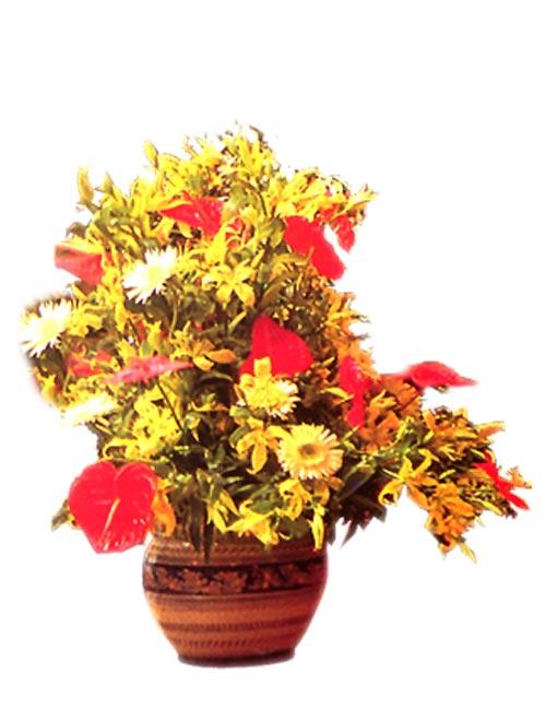 花草48;; 室内植物015 -素材世界 - 材质贴图 - 自然 - 室内植物