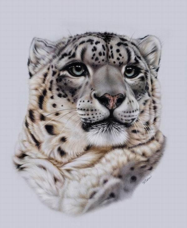 美丽的猫科动物版画—heatherzart